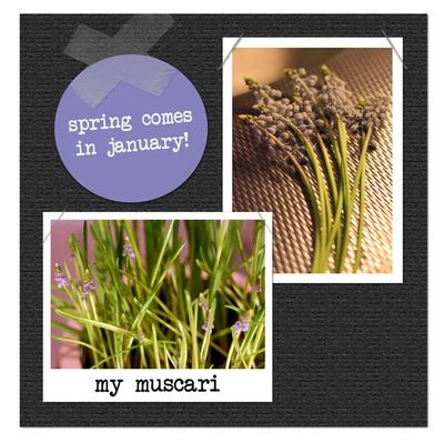Muscaryinjanuary-web