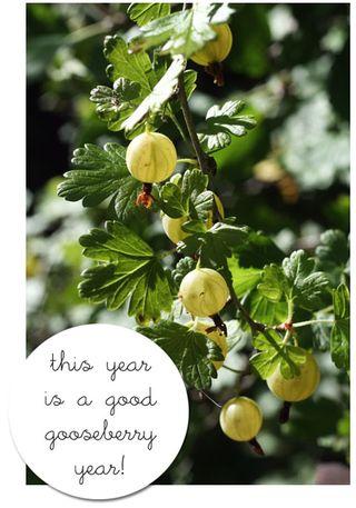 Gooseberry-year-web